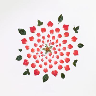 fleur-dessaemble-05